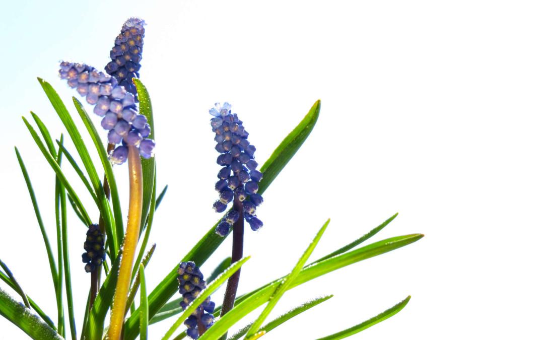 Pranzo di Primavera – domenica 26 marzo